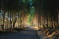 Caminho em Poços de Caldas - MG