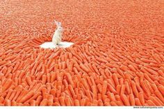 carrots that have fallen to heaven :)