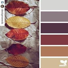 autumn hues color palette from Design Seeds Scheme Color, Colour Pallette, Color Palate, Colour Schemes, Color Combinations, Autumn Color Palette, Autumn Colours, Wedding Color Schemes, Wedding Colors