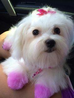 Lola cut Dogs, Animals, Animales, Animaux, Pet Dogs, Doggies, Animal, Animais