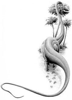 The Dino Directory - Seismosaurus - Natural History Museum Natural History Museum, Walt Disney Animation Studios, Museum Displays, Dinosaur Design, Thing 1, Prehistoric, Fossils, Creatures, Reptiles