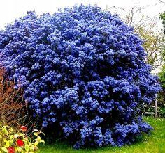 Garden Trellis, Wisteria, Ikebana, Landscape Architecture, Backyard Landscaping, Future House, Gardening Tips, Flora, Home And Garden