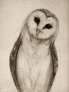 Barn Owl Sketch Art Print – Isaiah K. Stephens The post Barn Owl Sketch Art Print – Isaiah K. Stephens appeared first on Woman Casual. Bird Drawings, Animal Drawings, Owl Tattoo Drawings, Drawing Animals, Animal Sketches, Drawing Sketches, Sketching, Drawing Ideas, Owl Sketch