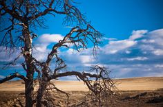 Wyoming IV  © Cinthia Gibbens-Stimson, All Rights Reserved.