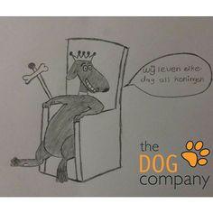 Natuurlijk wordt jouw hond elke dag verwend! Fijne koningsdag!  #hondenvaninstagram #hondenschool #honden #thedogcompany #hondentraining #koningsdag