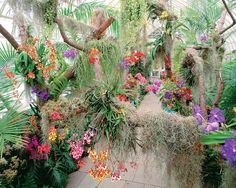 Soroa, Cuba. World famous Soroa Orchid Garden is home to 650 rare  orchids, both native and exotic.This is  the largest collection of Orchids in the world.It contains hundreds of varieties of orchids and has more than 20,000 orchid plants. It also has thousands of ferns and trees.