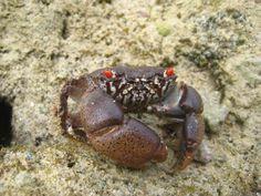 Crabs on South Beach African Animals, Crabs, South Beach, Tanzania, Funny, Ha Ha, Hilarious