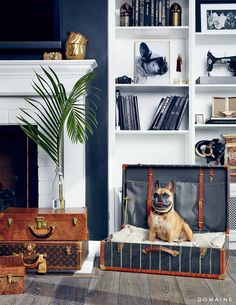 Meet aDog-Loving LA Designer Who's Transforming Pet Décor via @domainehome . . . inspiration for a dog bed