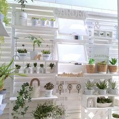 ccmanさんの、ベッド周り,観葉植物,100均,DIY,多肉植物,ベランダガーデン,ホワイト,ラティス,窓風DIY,植物のある暮らし,White&Gray,植物が育つ季節です☘,のお部屋写真