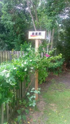 New craft bird house made with old mail box and bougainvilea