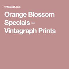 Orange Blossom Specials – Vintagraph Prints