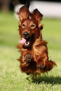 Jump Jump.. fly!!