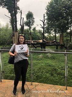 China DuJiangYan Panda Volunteer ChengDu WestChinaGo Travel Service www.WestChinaGo.com Tel:+86-135-4089-3980 info@WestChinaGo.com Chengdu, Volunteer Programs, China, Day Tours, Panda, Travel, Viajes, Destinations, Traveling