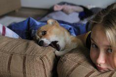 I chew sofas too