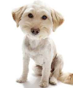 Mixed Breed dog with summer haircut