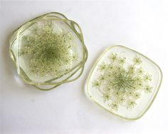Queen Anne's Lace Botanical Coasters
