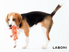 Kristof Krabbe - Handgeknüpftes Hundespielzeug von LABONI Dog Toys, Corgi, Pets, Handmade, Animals, Design, Crabs, Corgis, Hand Made