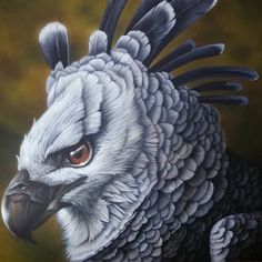 """Harpy or a American Harpy Eagle """"Harpia harpyia"""" Animal Sketches, Animal Drawings, Cool Paintings, Animal Paintings, Eagle Artwork, Eagle Drawing, Harpy Eagle, Eagle Painting, Zoo Photos"""