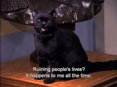 Salem, the cat.