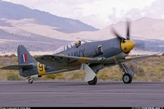 Hawker Sea Fury T20 aircraft picture