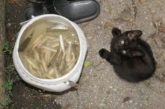 Black cat is always present !