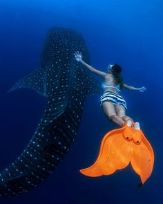 Majestic.. This is just majestic, swimming and take a photo of whale sharks is one of my wish list. Thank you universe  #whaleshark #gorontalo #wonderfulindonesia