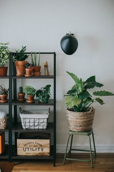 plantas para refrescar a casa