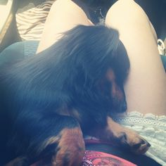 Always sleeping in my lap