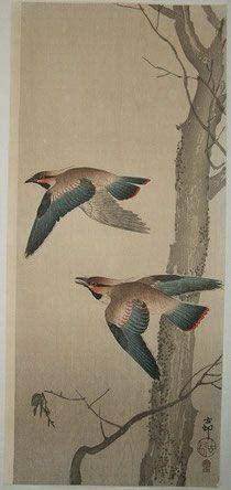 ヒレンジャク Two waxwings in flight next to a bare tree