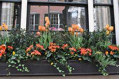 Plant a window box like this