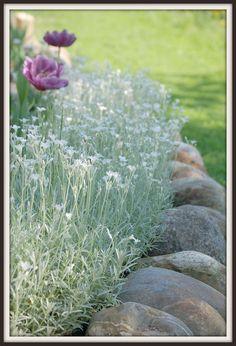 Maalaisunelmaa: puutarha Landscape Edging, Garden Edging, Patio Pergola, Backyard, Balcony Garden, Garden Plants, Dream Garden, Home And Garden, Balcony Flowers