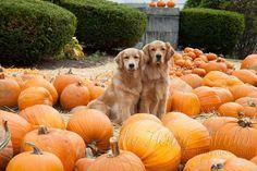 Happy Fall!!