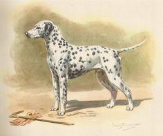 Use coupon code PINTEREST to save 10% off of your purchase! DALMATIAN DOG Vintage Illustration 1942 Vintage Dog Print Cottage Home Decor (No. 57)