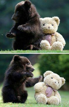 Bear Cub Makes New Friend!