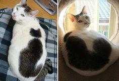 chats insolites | 15 chats au pelage étonnants avec leurs tâches insolites - Egrafla