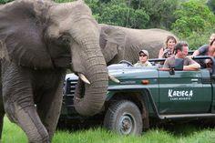 Kariega River Lodge - View the wild African Elephant at Kariega Game Reserve.