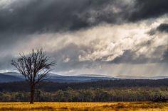 Фотография Dry gloomy winter автор Tony Lim на 500px