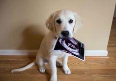 Cutest pregnancy announcement ever.