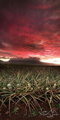 ✯ Pineapple Field - Hawaii