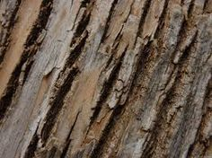 natural textures - Google Search