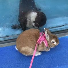 Otters are just so cute - Kübra Aslanboga - They never let go do they? Otters are just so cute Let's help you adopt and train a baby otter Cute Funny Animals, Funny Animal Pictures, Cute Baby Animals, Funny Cute, Animals And Pets, Otters Funny, Baby Otters, Cute Creatures, My Animal