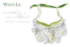"""White Lie by Michel Tcherevkoff        """"Cover the stark truth with an innocent blush of color and it becomes so much easier to carry,"""""""