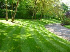 shady garden lawn mix - Google Search