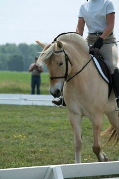 Gorgeous!!! Fjord mare for sale in Wisconsin www.willowsedgefarm.com