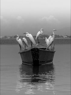 .A boat of Ibis ........fishing.