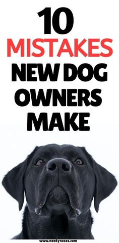 Don't fall for these 10 mistakes new dog owners make! Read how to avoid them and you'll prevent future headaches. #dogtips #dogcare Dog Nutrition, Nutrition Guide, Dog Health Tips, Cool Dog Houses, Havanese Dogs, Dog Information, Dog Pin, Dog Care Tips, Dog Boarding
