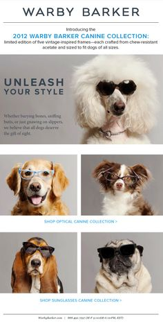 Warby Parker Mail Chimp Newsletter Design - Pet Style ;-)