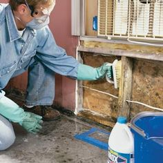 Treat mold with a solution of bleach and water
