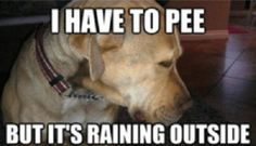 I have to pee, but it's raining outside