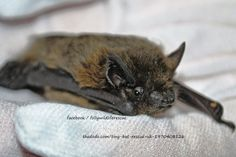 News about bats on Twitter